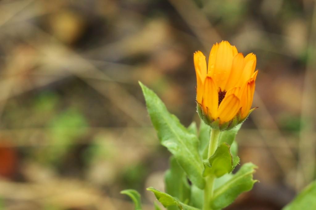 Blühpflanzen im Januar